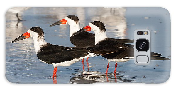 Black Skimmer Birds Galaxy Case by Chris Scroggins