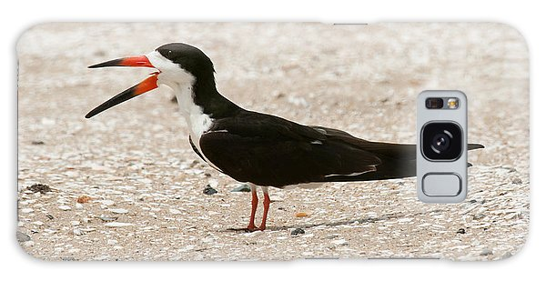 Black Skimmer On Assateague Island Galaxy Case