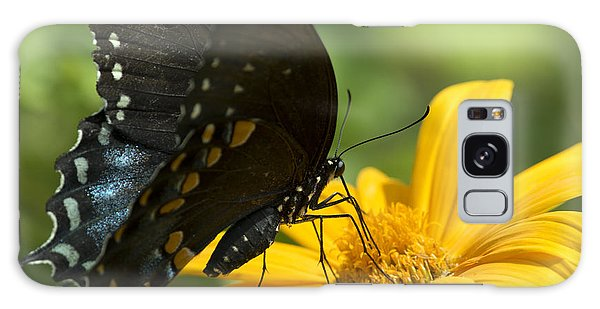 Black Swallowtail Drinking Galaxy Case