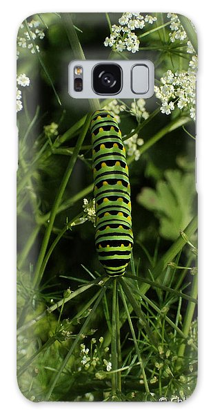 Galaxy Case featuring the painting Black Swallowtail Butteryfly Caterpillar by Chholing Taha