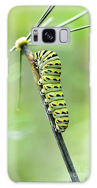 Black Swallowtail Caterpillar Galaxy Case by Debbie Green