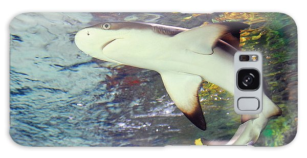 Black Tipped Reef Shark-1 Galaxy Case