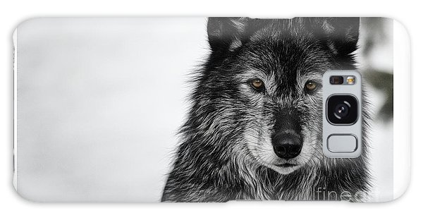 Black Wolf I Galaxy Case