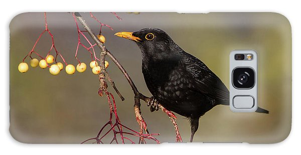 Blackbird Yellow Berries Galaxy Case
