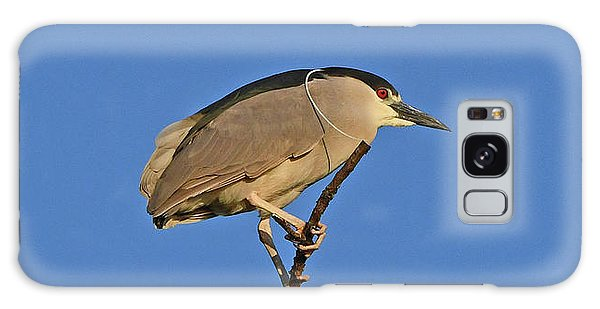 Galaxy Case featuring the photograph Black-crowned Night Heron by Ken Stampfer