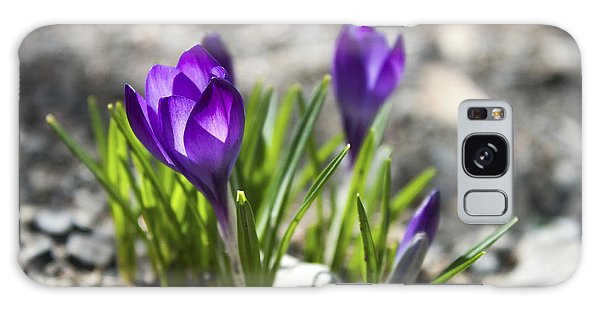 Blooming Crocus #1 Galaxy Case by Jeff Severson