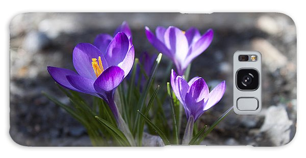 Blooming Crocus #3 Galaxy Case by Jeff Severson