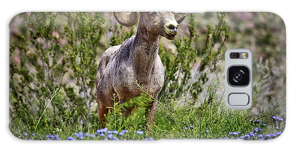 Blooms And Bighorn In Anza Borrego Desert State Park  Galaxy Case