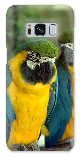 Blue And Gold Macaws Galaxy Case