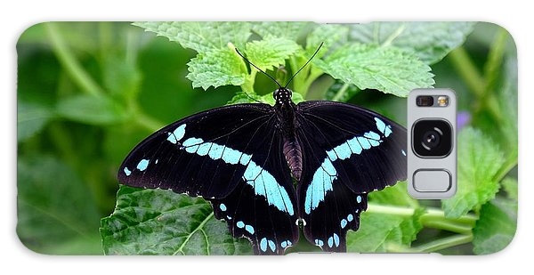 Blue Banded Swallowtail Butterfly Galaxy Case