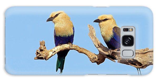 Blue-bellied Rollers On Branch  Galaxy Case