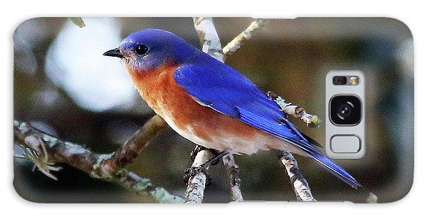 Blue Bird Galaxy Case by Lamarre Labadie