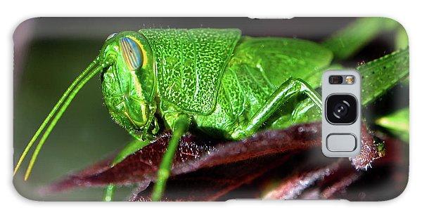 Blue Eyed Green Grasshopper 001 Galaxy Case