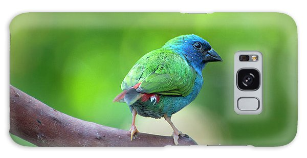 Blue-faced Parrotfinch Galaxy Case