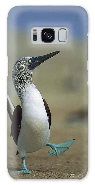Galaxy Case featuring the photograph Blue-footed Booby Sula Nebouxii by Tui De Roy