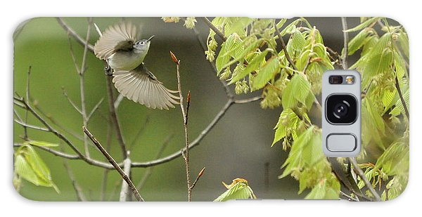 Blue-gray Gnatcatcher Galaxy Case