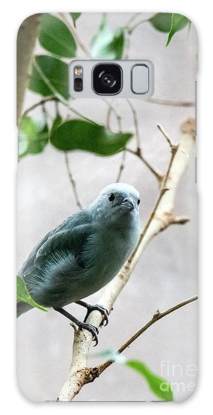Blue-grey Tanager 2 Galaxy Case