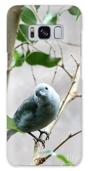 Blue-grey Tanager Galaxy Case
