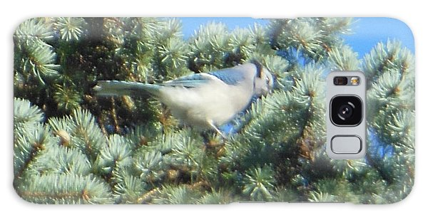 Blue Jay Colorado Spruce Galaxy Case