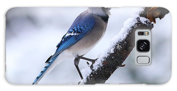 Blue Jay In Snow Galaxy Case