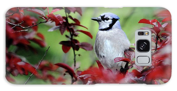 Blue Jay In The Plum Tree Galaxy Case