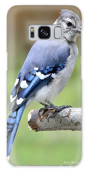 Galaxy Case - Blue Jay Juvenile Animal Portrait by A Gurmankin