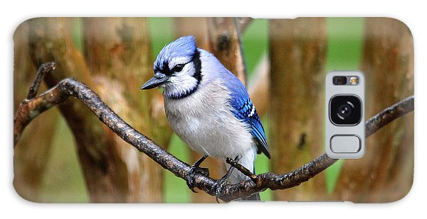 Blue Jay On A Branch Galaxy Case
