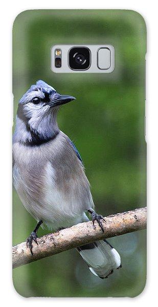 Blue Jay On Alert Galaxy Case