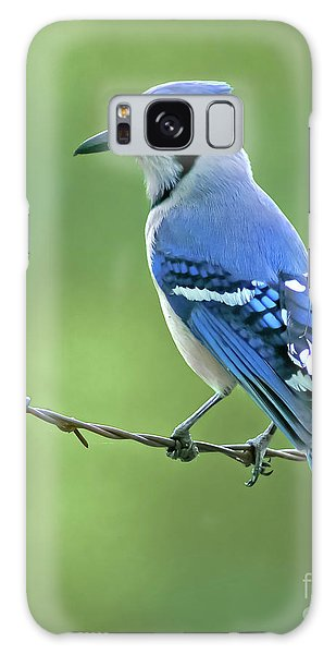 Blue Jay On The Fence Galaxy Case