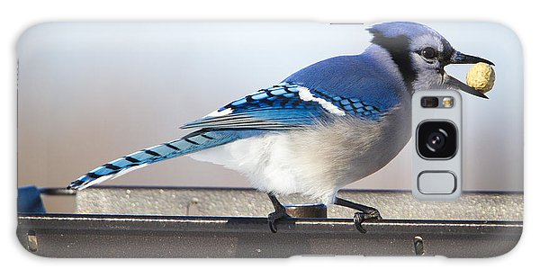 Blue Jay With A Mouth Full Galaxy Case