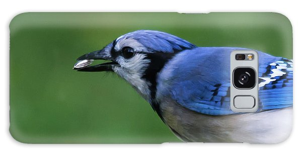 Blue Jay With Seed Galaxy Case