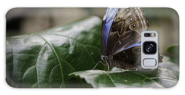Blue Morpho On A Leaf Galaxy Case by Jason Moynihan