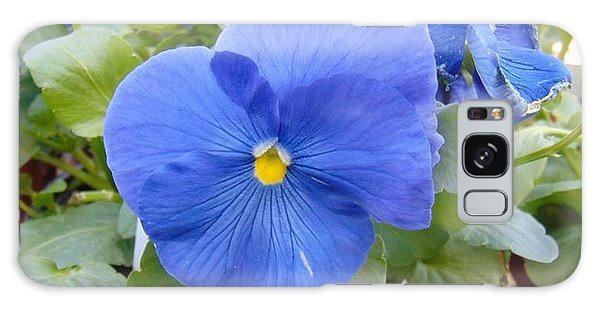 Blue Pansy Flower Galaxy Case by Charlotte Gray