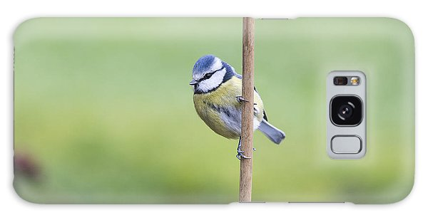 Titmouse Galaxy Case - Blue Tit On A Garden Cane by Tim Gainey