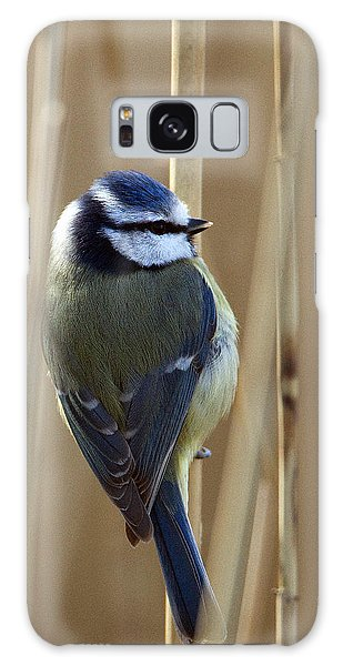 Blue Tit On Reed Galaxy Case