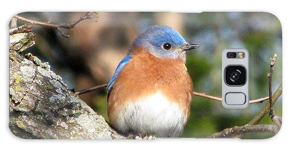 Bluebird Galaxy Case - Bluebird by Amy Tyler