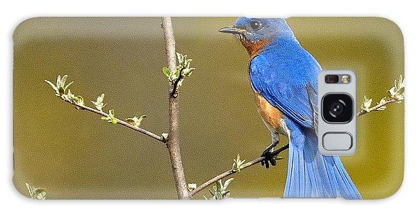 Bluebird Bliss Galaxy Case