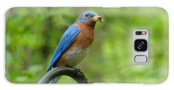 Bluebird Catches Worm Galaxy Case