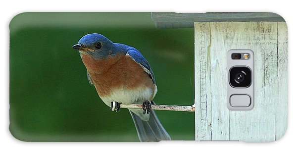 Bluebird Galaxy Case