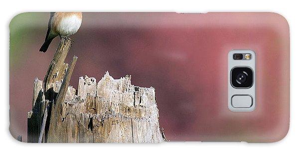 Bluebird Fall Perch Galaxy Case