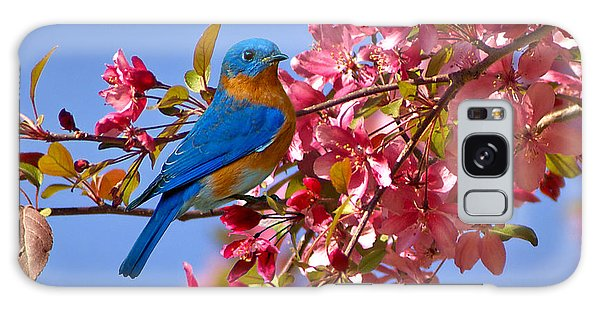 Bluebird In Apple Blossoms Galaxy Case by Marie Hicks