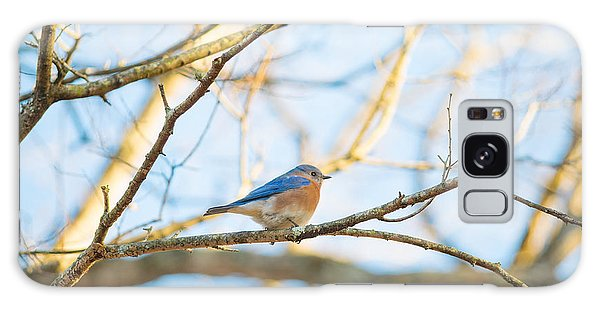 Bluebird In Tree Galaxy Case