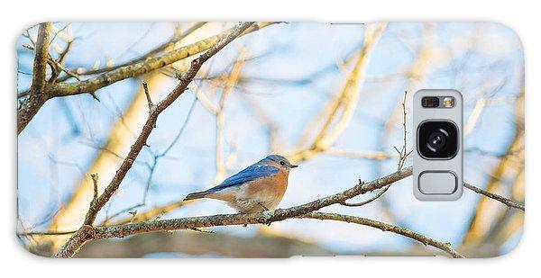 Bluebird In Tree Galaxy Case
