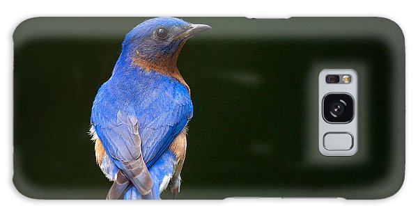 Galaxy Case featuring the photograph Bluebird Male by Angel Cher