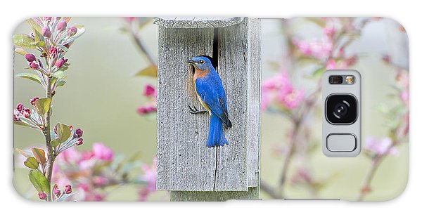 Bluebird Nesting Box Galaxy Case