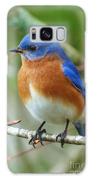 Bluebird Galaxy Case - Bluebird On Branch by Crystal Joy Photography