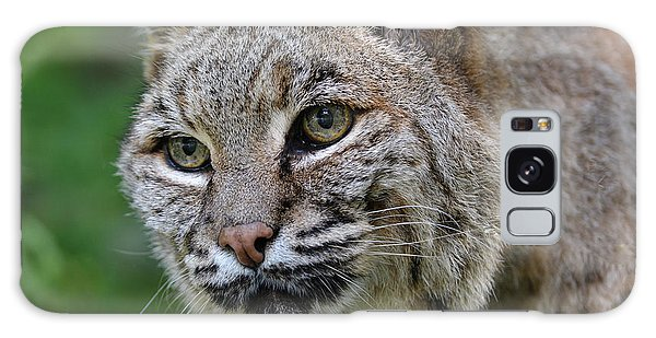 Bobcat In The Trees Galaxy Case