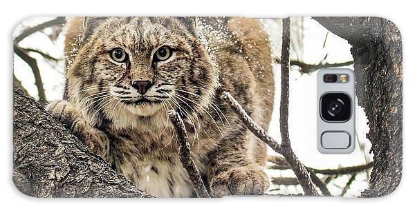 Bobcat In Winter Galaxy Case