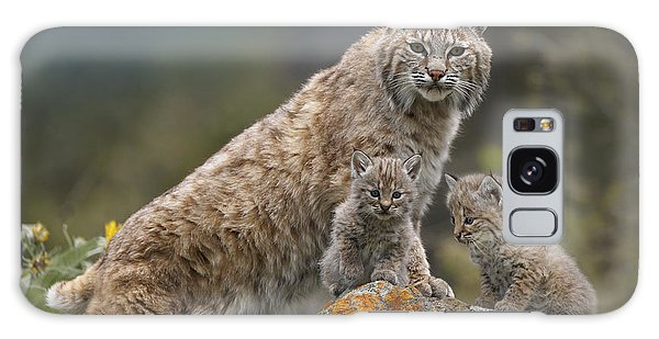 Galaxy Case featuring the photograph Bobcat Mother And Kittens North America by Tim Fitzharris