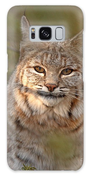 Bobcat Portrait Surrounded By Pine Galaxy Case